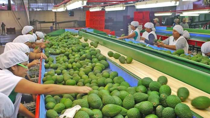 Las importaciones de frutas de Estados Unidos aumentaron un 4% durante el primer trimestre