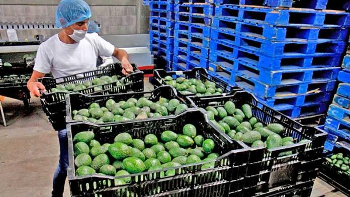 Exportaciones agroalimentarios de México suben 11.68% pese a coronavirus en primer cuatrimestre de 2020