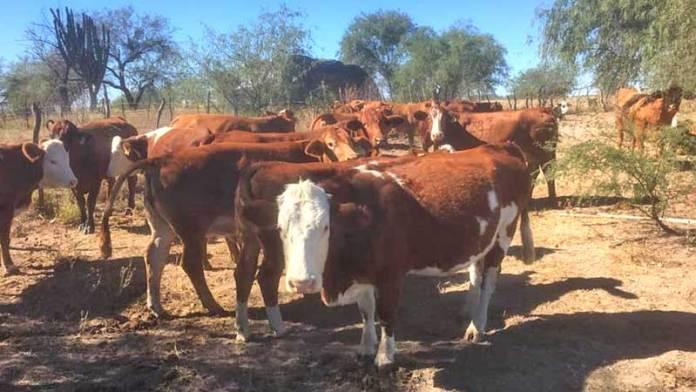 Convoca CNOG a alianza con la Federación para salvaguardar ganadería en México