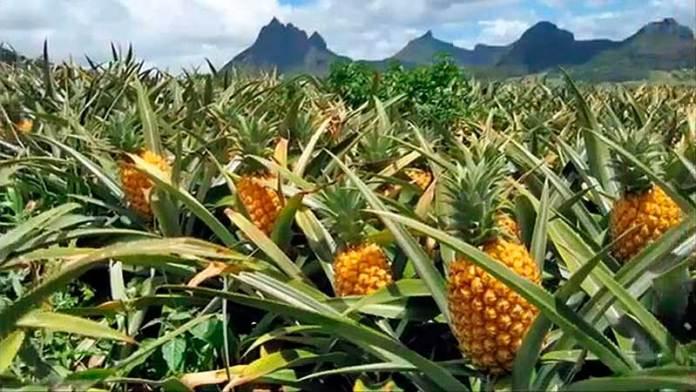 México defenderá exportaciones agrícolas con Estados Unidos