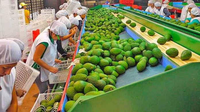 Superávit agroalimentario mexicano aumenta 19% al primer semestre del año