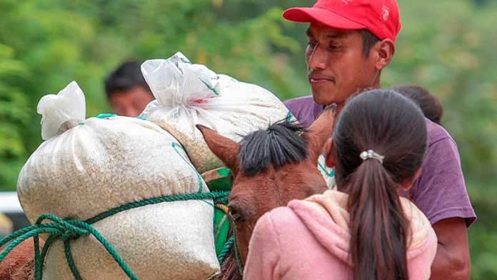 Adelanta Agricultura producción favorable de los granos básicos