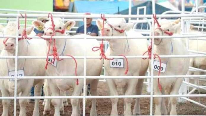 Mantienen productores exportación de carne