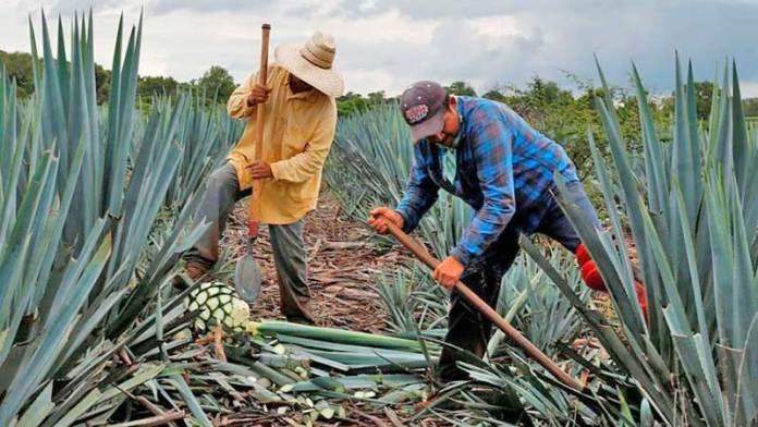 IMPI y CRT reforzarán protección legal del tequila
