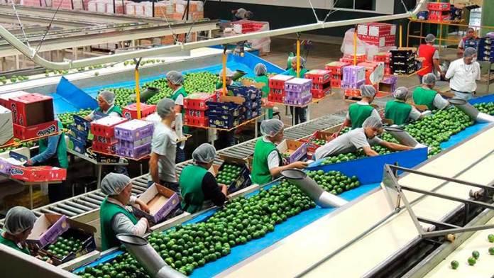 Bajan exportaciones de cítricos a Estados Unidos