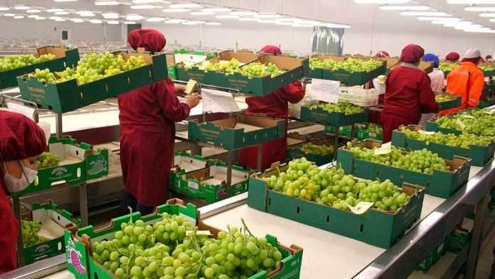 Estados Unidos ve compras récord de agro productos de México en 2021