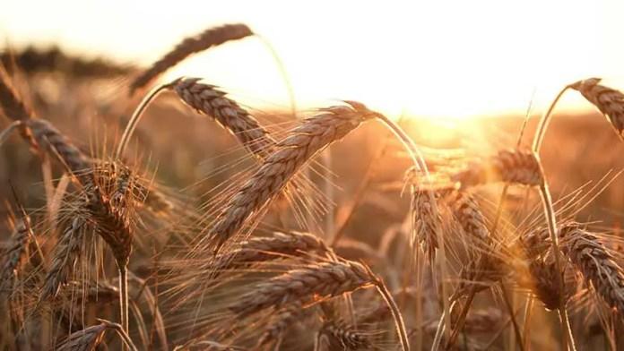 Este año las importaciones de granos y oleaginosas le han costado a México 65% más recursos