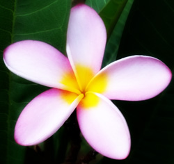 Kahuna Massage comes from Hawaii