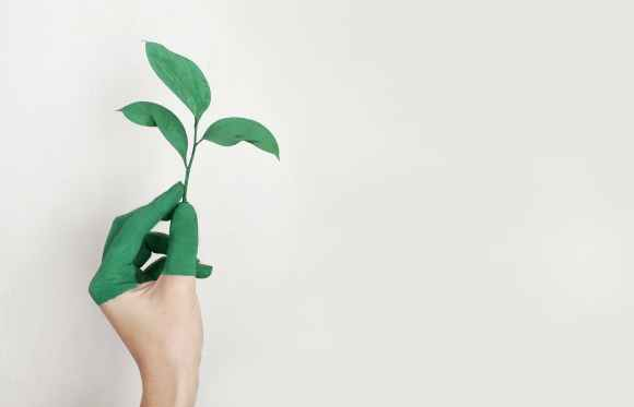 person s left hand holding green leaf plant