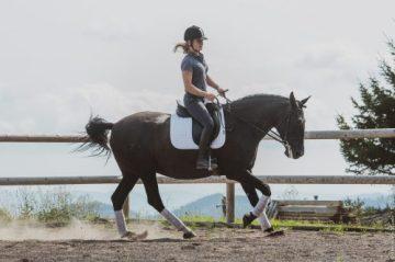Estrela 2021 - cheval lusitanien noir
