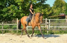 Xeque Mate lusitano stallion