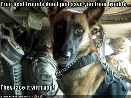 Soldier Dog.jpg