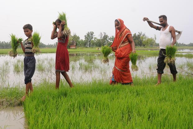 Indian farmers.jpg