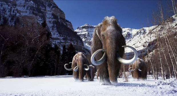 woolly mammoths 2.jpg