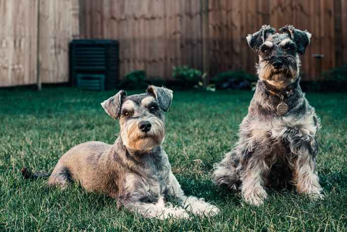 photo of dogs on grass