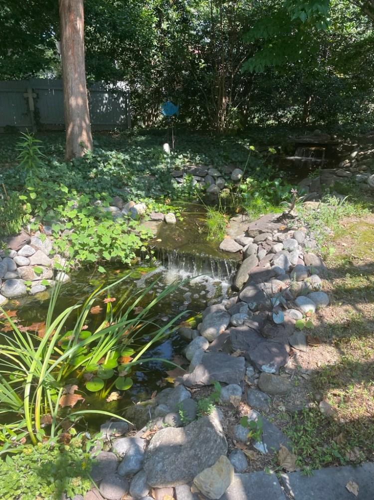 The O'Meally pond