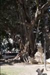 Baum mit Wurzelzweige