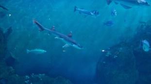 National Marine Aquarium 1