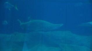 National Marine Aquarium 5