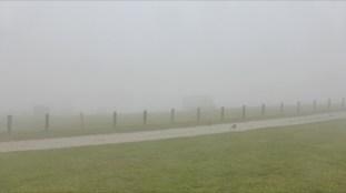 Nebelblick