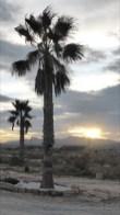 Rancho Buena Vista 5