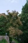 Sissinghurst 8