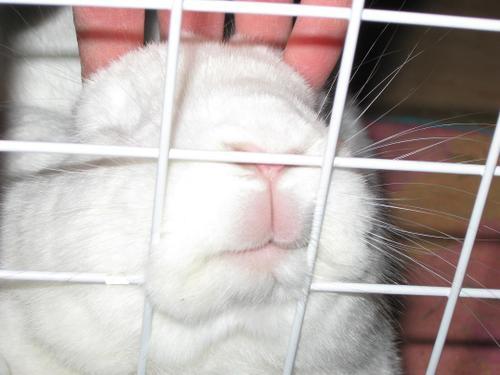 por favor dejdme salir... soy inocenteee