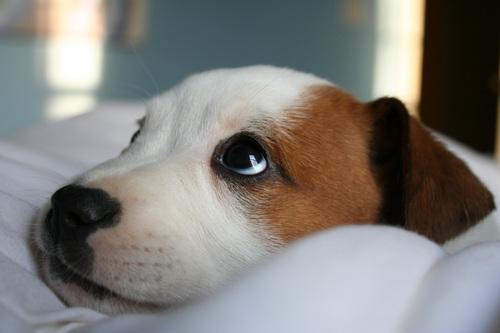 escucho la perrito señal