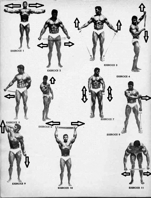 Exercices De Musculation En Bodybuilding 4partie