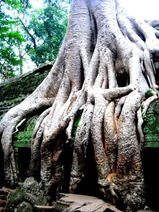 The trees at Pra Thom