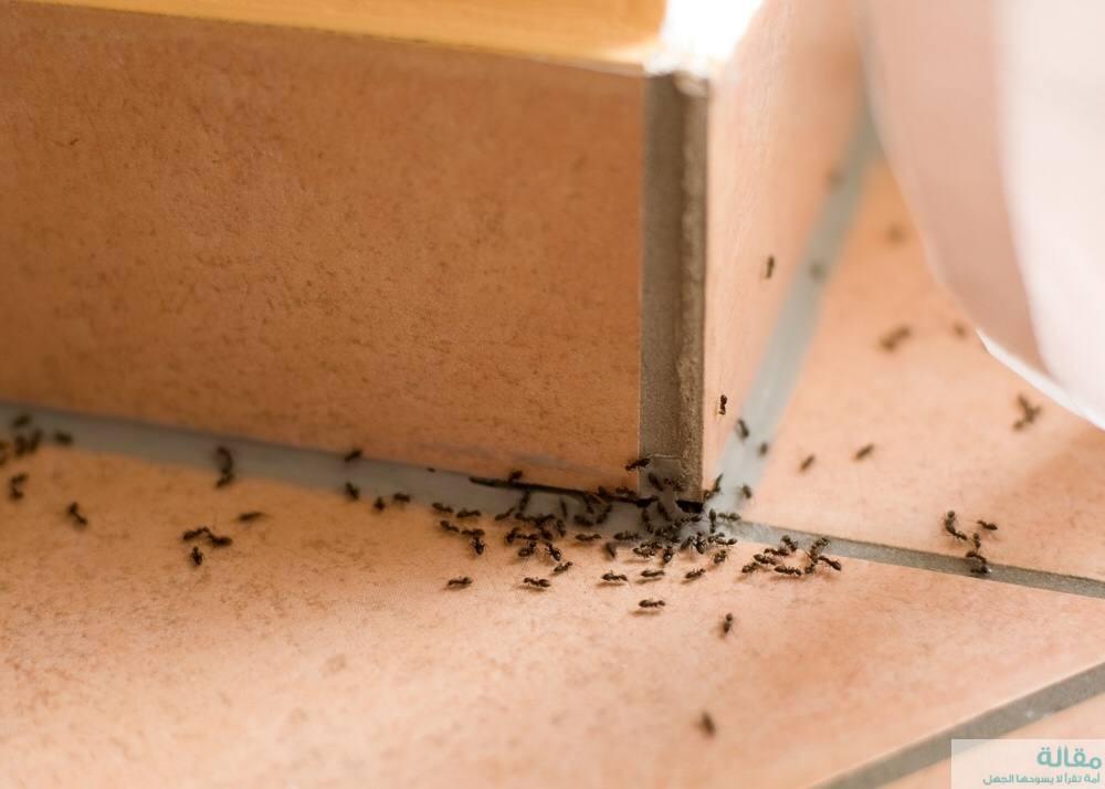 طرق للتخلص من النمل في الصيف بسهولة
