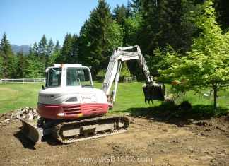 Digging up the Maple tree