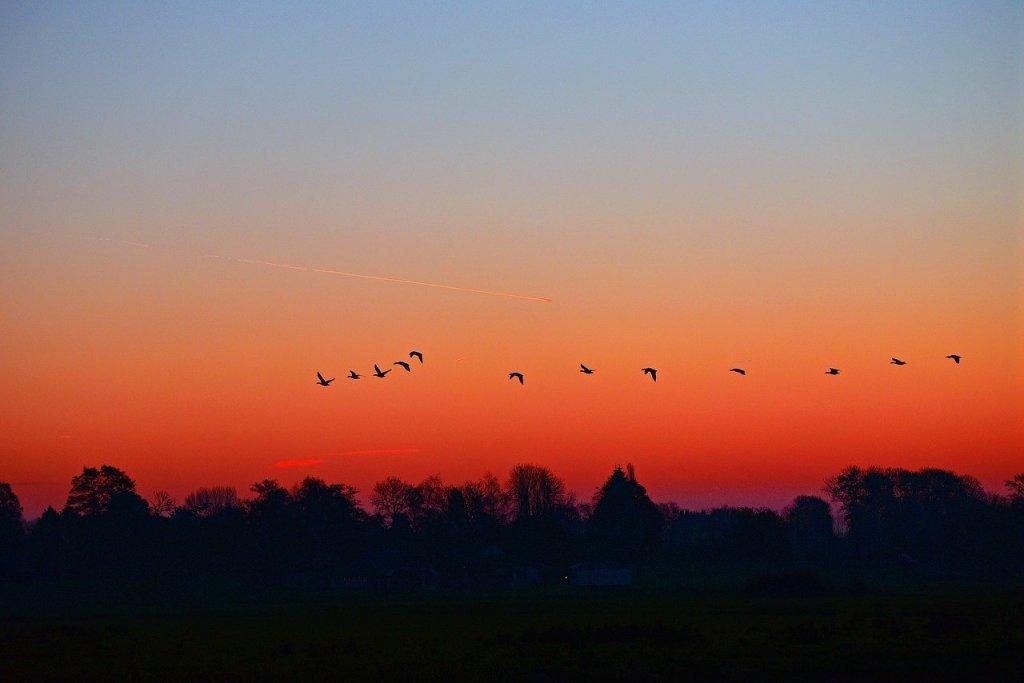 dawn, sunrise, early morning