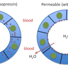 Permeable vs impermeable