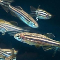 cropped-zebrafish-banner.jpg