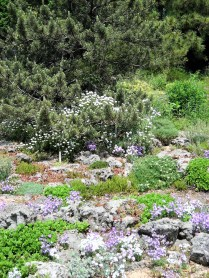 Miniature blooms of many species brighten the tufa garden in May