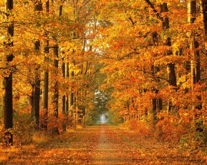 autumn_country_road.jpg