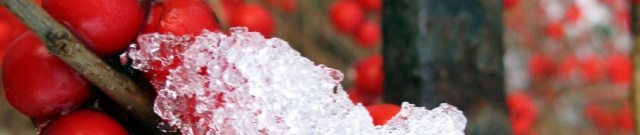 cropped-winterberry.jpg