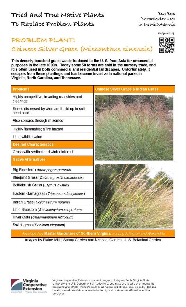 MGNVorg Chinese Silver Grass