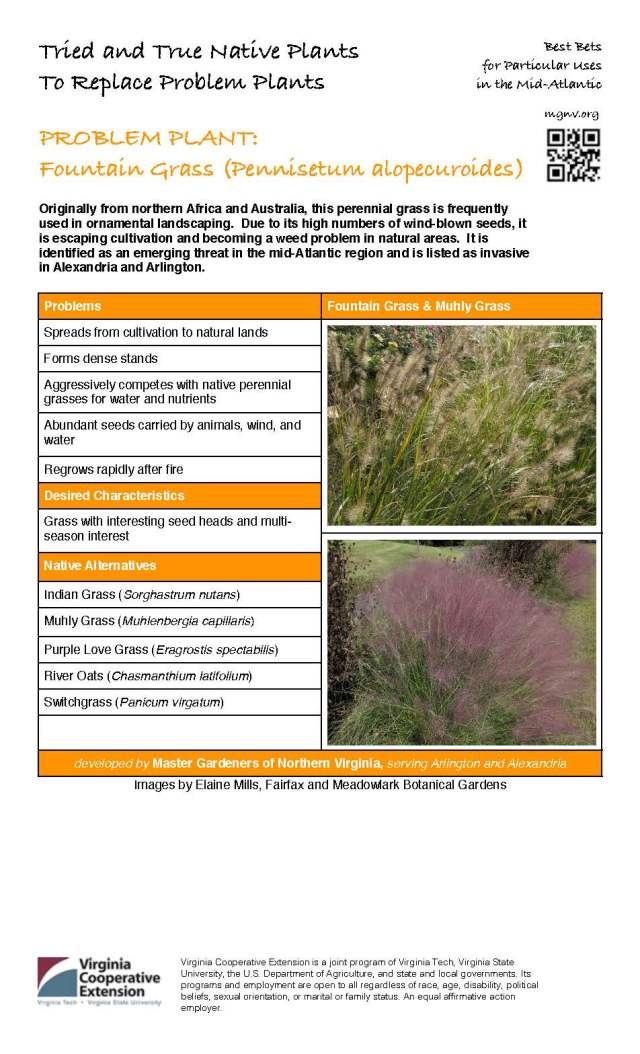 MGNV org Fountain Grass
