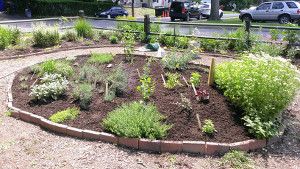 3 herb bed