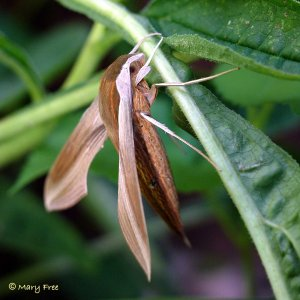 insect-3