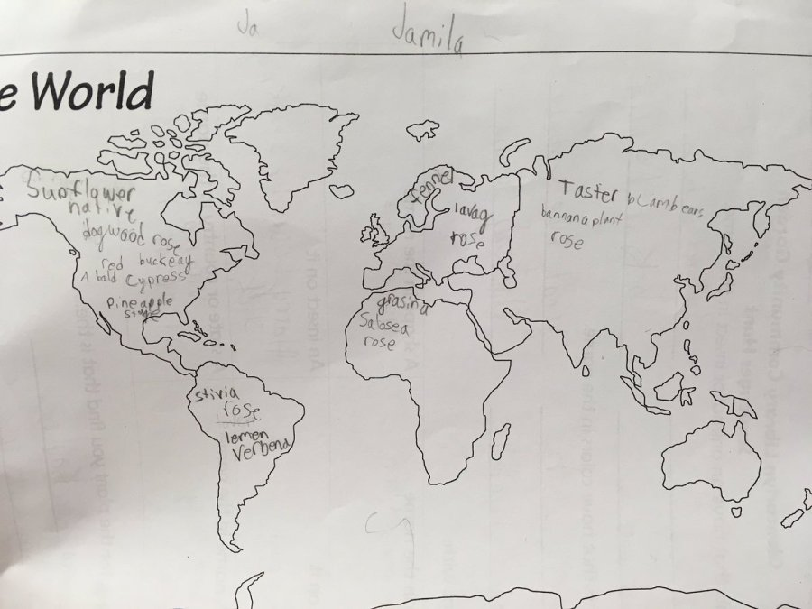 World Map with plant names written onto continents