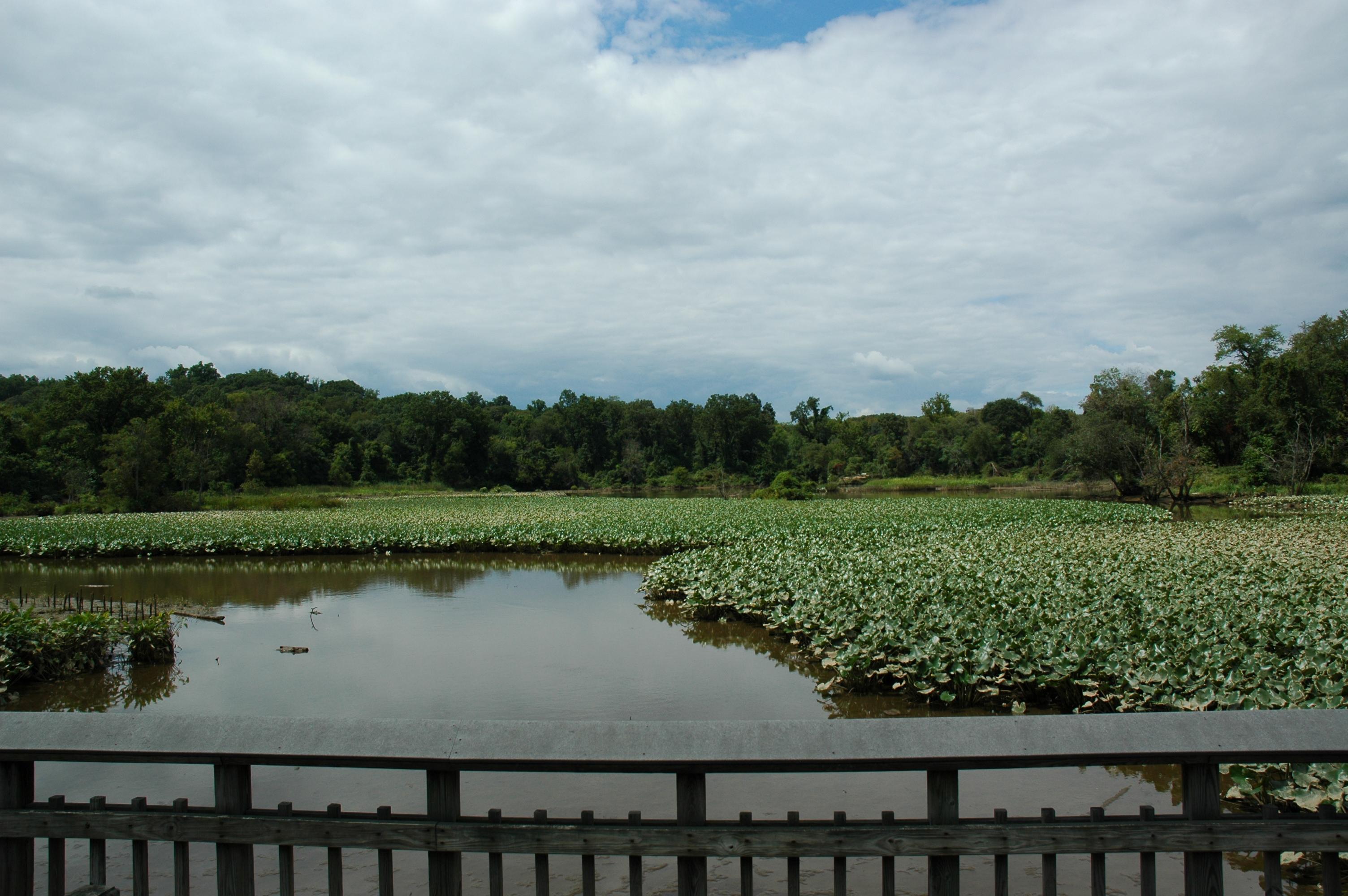 Quarry Shade Garden At Bon Air Park: Regional Gardens: Kenilworth Park & Aquatic Gardens