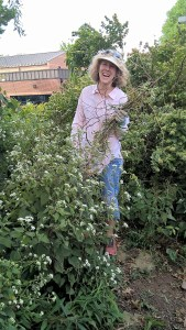 Beth Tindal tidies up the willow trimmings from the butterfly garden