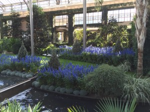 Evergreens and blue-themed flowers interspersed with permanent collection in the East Conservatory.