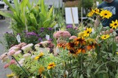 Close-up of Country Gardens Nursery plants for sale.