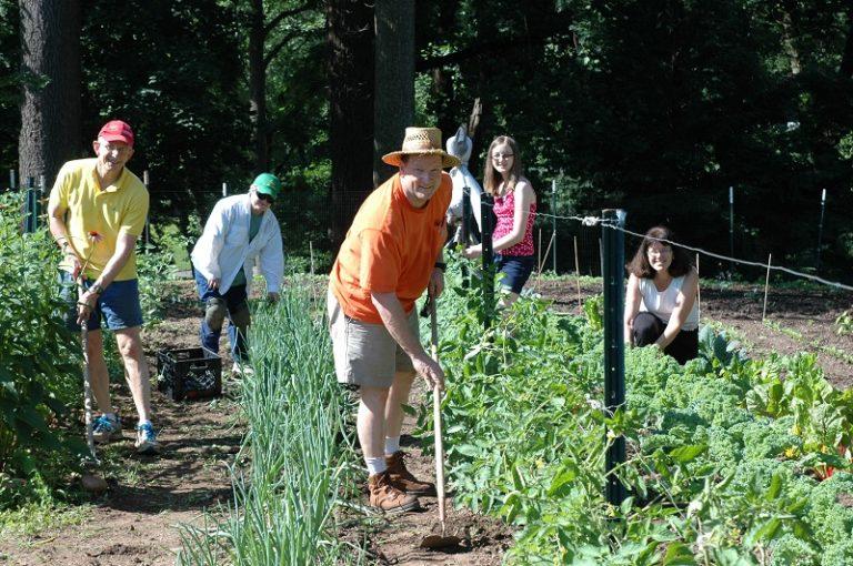 St. Andrews Plot Against Hunger garden