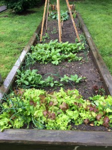 Spinach, lettuces, onions.