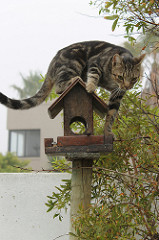 Cat hunting for birds Photo by Ian Barbour on Flickr.